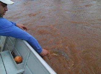 Confira o novo período para pesca de espécies nativas no Paraná, a Piracema
