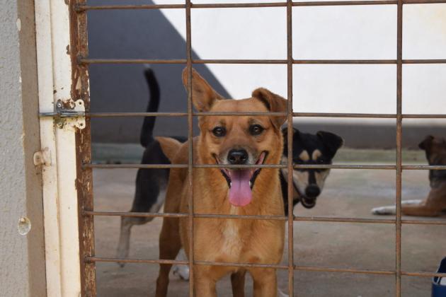 Canil Municipal de Guarapuava inicia campanha de adoção responsável de animais