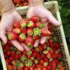 Paraná aumenta possibilidades de crédito para agricultura familiar do estado