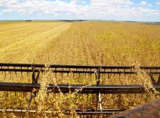 Produção de grãos no Paraná deve atingir a marca de 40 milhões de toneladas