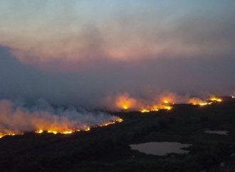 Senado instala comissão para acompanhar ações de enfrentamento aos incêndios no Pantanal
