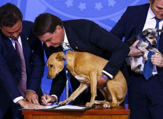Lei aumenta pena para quem maltratar cães e gatos