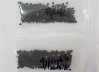 Adapar alerta sobre recebimento de sementes em encomendas vindas do exterior