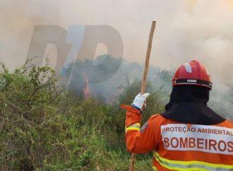Vídeo: Campos Gerais conta com dois bombeiros lutando contra queimadas no Pantanal; veja imagens